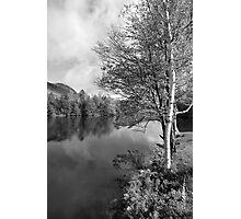 Lake Birch Trees Photographic Print