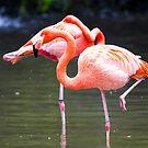 Flamingos by Mili Wijeratne