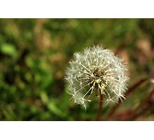 Dandelion Puff Photographic Print