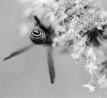 Bullseye by Johanne Brunet