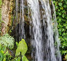 A waterfall in the Singapore Botanical Gardens by Nigel Donald