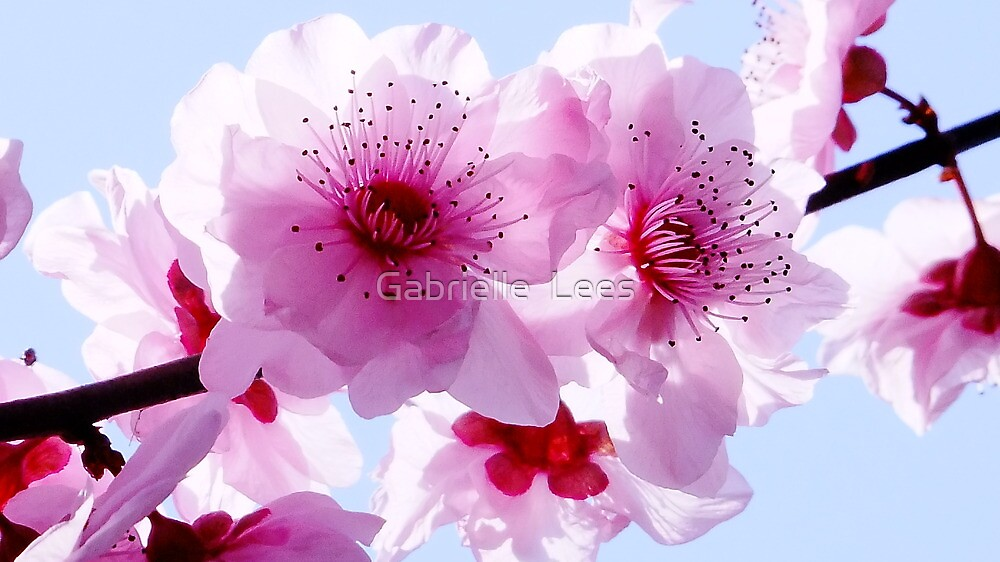 Blossom Time by Gabrielle  Lees