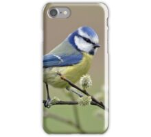 Blue tit on Pussy Willow iPhone Case/Skin