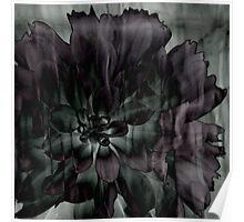 Mystery Flower Poster