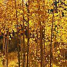 Golden Aspen by the57man