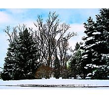 Trees in Snow Photographic Print