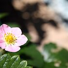 Small Pink Flower by Kelly Walker