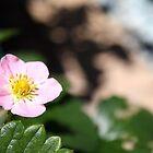 Small Pink Flower by Kelly Walker
