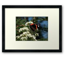 Vibrant Wings Framed Print