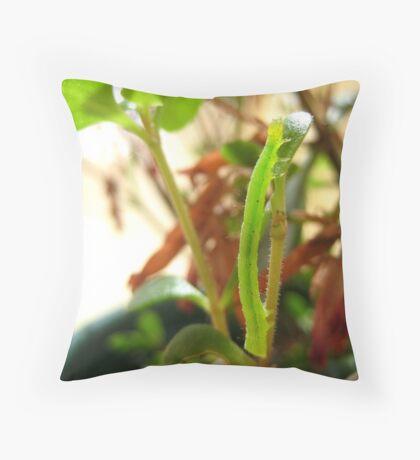 Hungry Little Caterpillar Throw Pillow