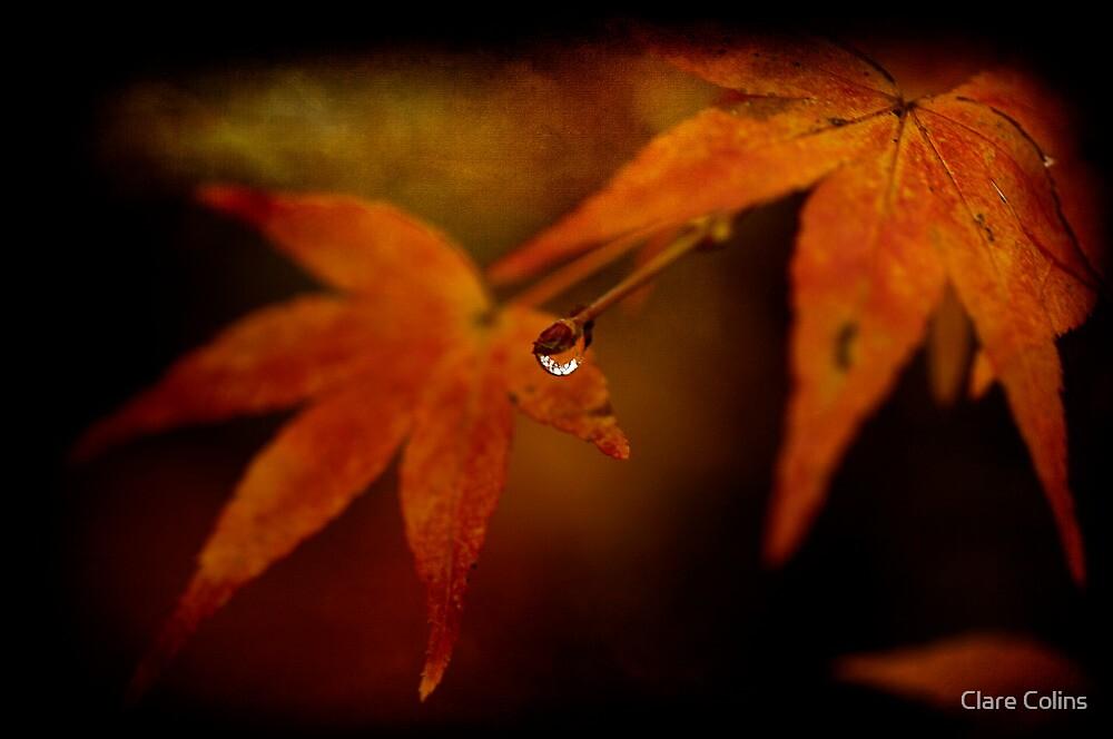 Autumn Colour by Clare Colins