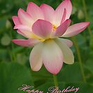 Pink Lotus - Happy Birthday by Bev Pascoe