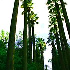 palmtrees by Yannis-Tsif