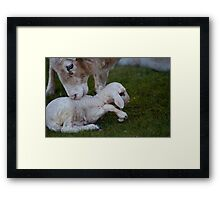 Born into the Cold Framed Print