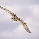 Barn Owl by M.S. Photography/Art