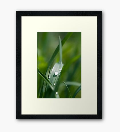 Morning dew on the grass Framed Print