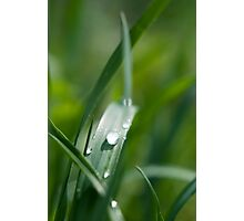 Morning dew on the grass Photographic Print