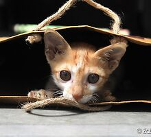 Cat in the brown paper bag by Zabeeh Afaque