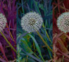 Trio of Dandelions  by BlossomingBeth