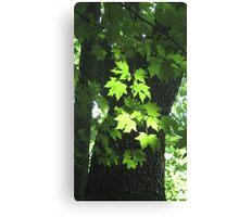 Poet-Tree Canvas Print