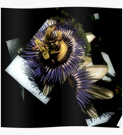 Photo 2.8: These Fading Flowers, Perfect as Memory Poster