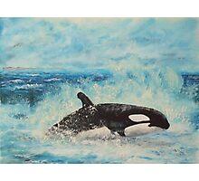 ORCA KILLER WHALE Photographic Print
