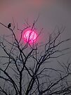 Sunshine Silhouette in Hot Pink by BettyEDuncan
