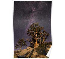 Moonlit Pine Poster