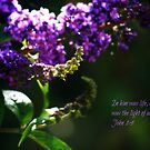 Life and Light by Ms-Bexy