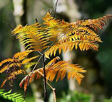 Withering Ferns in Sunlight by relayer51