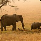 Elephants in the Dust by David McGilchrist