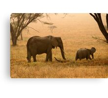 Elephants in the Dust Canvas Print