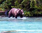 Grizzly Fishing on the Chilkoot by Yukondick