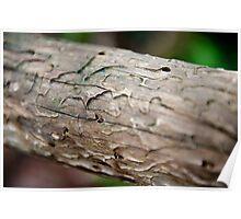 Termite Snacks Poster