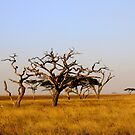 Plains of Africa by David McGilchrist
