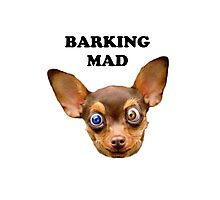 Barking mad Photographic Print