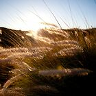 Sunset Tall Grass by Shannon Kerr