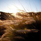 Sunset Tall Grass by Shannon Kerr