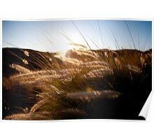 Sunset Tall Grass Poster