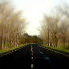 The Avenue of Honour by cjcphotography