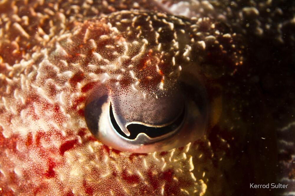 Cuttle Fish Eye by Kerrod Sulter