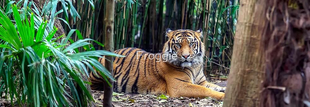 Wild cat by Gerard Rotse