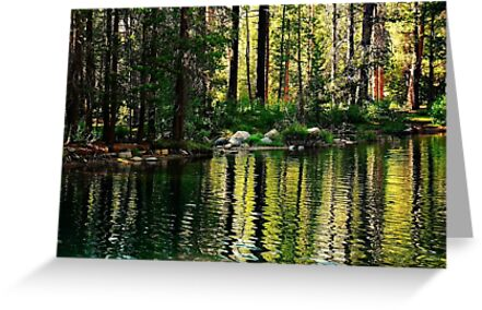 Reflections in the Woods by Barbara  Brown