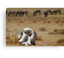 Reality of the Serengeti Canvas Print