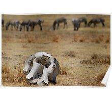 Reality of the Serengeti Poster