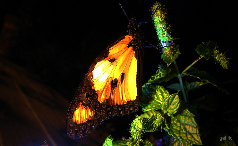 Monarch at Night by gelillc
