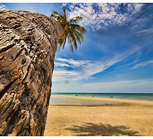 Palm tree in Koh Samui #2 by Kerrod Sulter