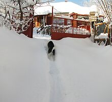 No1 Snowplough Clears the Way Home by Dennis Melling