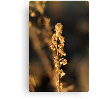 Light flower 2 Canvas Print