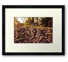 A grassy sunset Framed Print